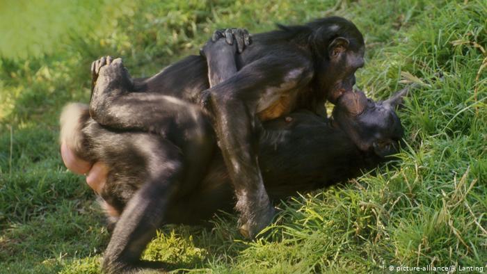 bonobos 2.jpg